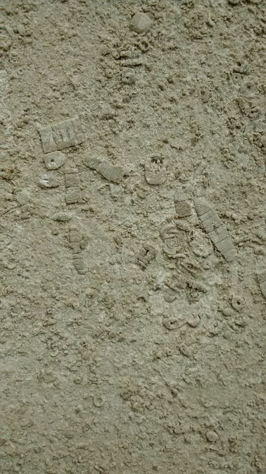 Fossils in Dr Johnson statue