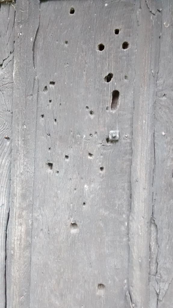Holes in the door