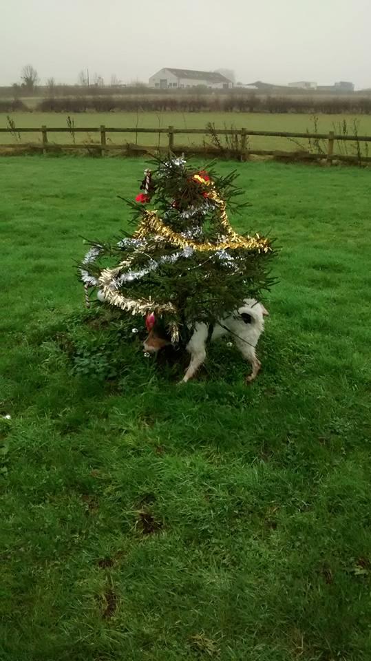 dog xmas tree