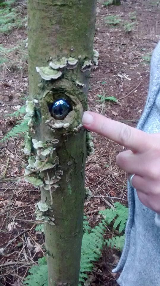 leomansley-woods-june-2016