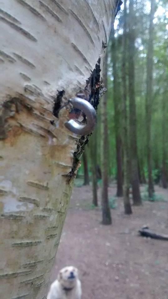 woods-june-2016-3