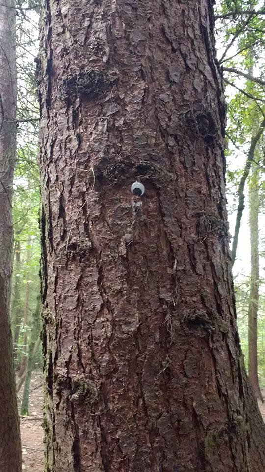 woods-oct-16-2