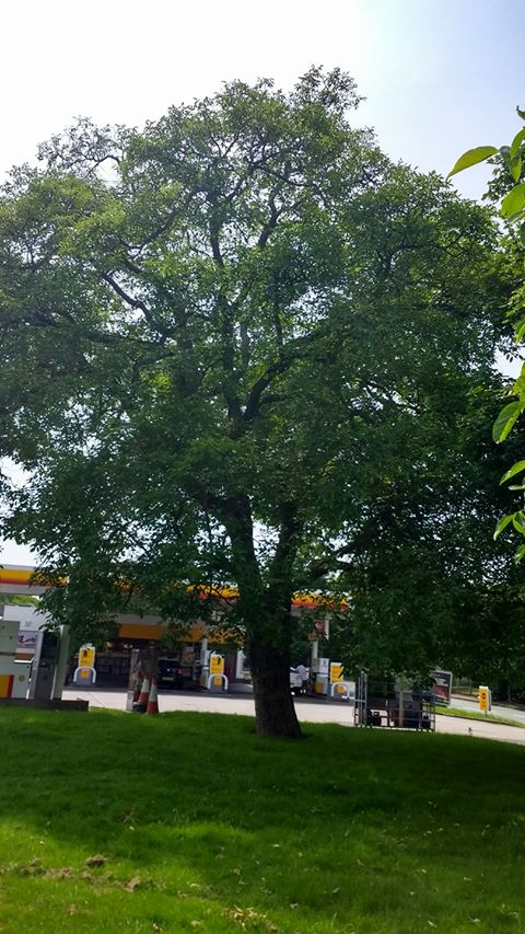 Walnut Tree at the Shell garage on the London Rd and Tamworth Rd junction