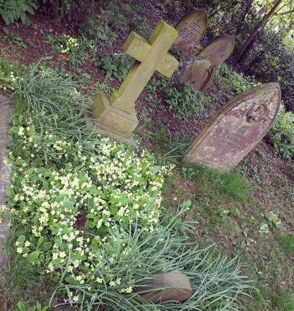 Primrose graves Christ Church